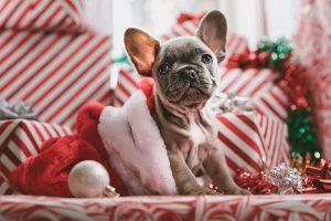 Keto Feestdagen Kerst Sinterklaas Recepten Uitdaging Wedstrijd Competitie Challenge - Keto voor Beginners - Ketovoor Feestdagen - Ketogeen dieet Decembermaand België Nederland